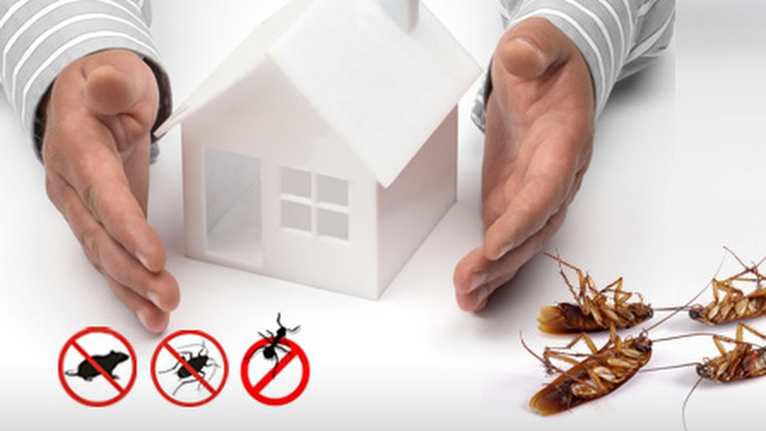 Steps to Begin Your Pest Control - Dull Magazine